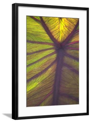 Sun in the Leaves I-Karyn Millet-Framed Art Print