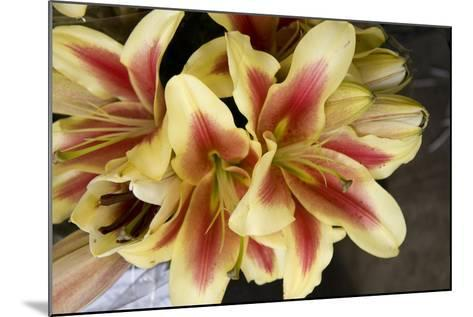 Vanilla Lily I-Maureen Love-Mounted Photographic Print