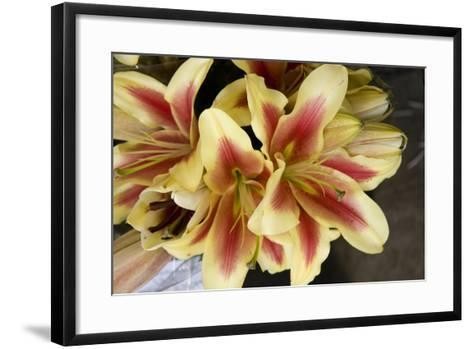 Vanilla Lily I-Maureen Love-Framed Art Print