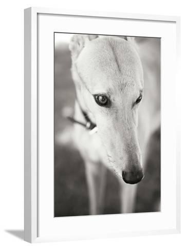 Greyhound Black and White-Karyn Millet-Framed Art Print