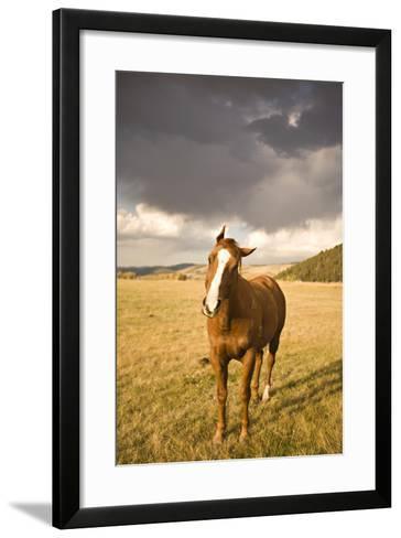 Out in the Pasture I-Karyn Millet-Framed Art Print