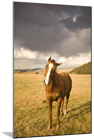 Out in the Pasture I-Karyn Millet-Mounted Photographic Print