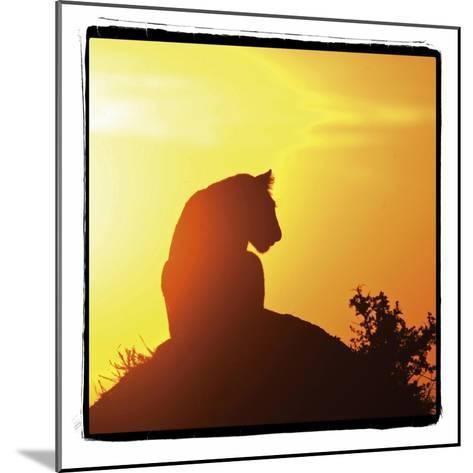Radiant Africa 4-Susann Parker-Mounted Photographic Print