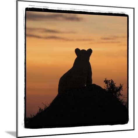 Radiant Africa 3-Susann Parker-Mounted Photographic Print