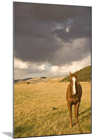 Out in the Pasture II-Karyn Millet-Mounted Photographic Print