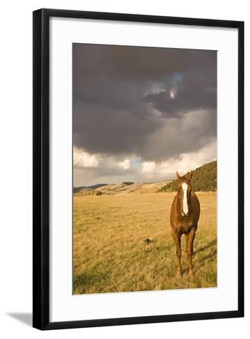 Out in the Pasture II-Karyn Millet-Framed Art Print