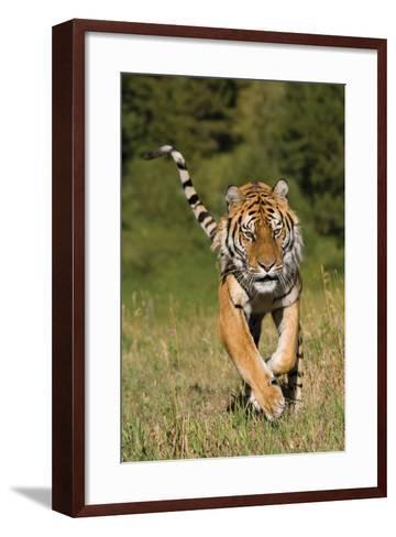 Tiger Run-Susann Parker-Framed Art Print