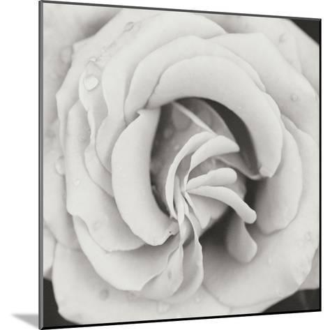 Classic Rose Square-Erin Berzel-Mounted Photographic Print