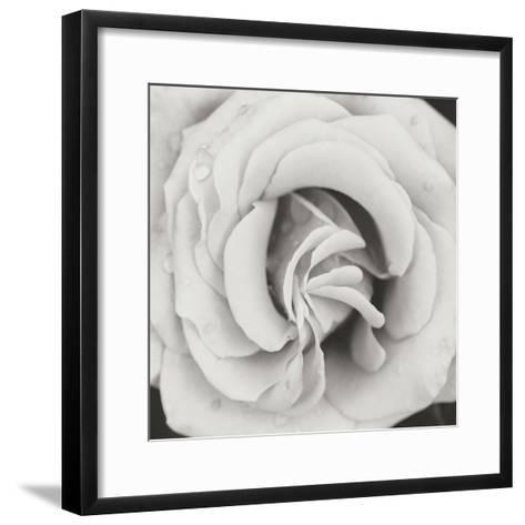 Classic Rose Square-Erin Berzel-Framed Art Print