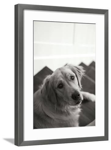 Goldie I Black and White-Karyn Millet-Framed Art Print