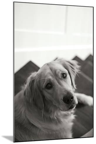 Goldie I Black and White-Karyn Millet-Mounted Photographic Print