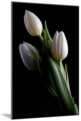 Tulips IV-C^ McNemar-Mounted Photographic Print