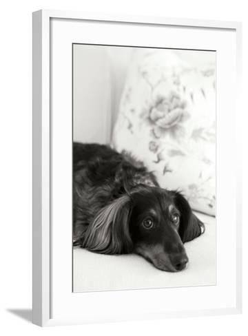 Dachshund Black and White-Karyn Millet-Framed Art Print