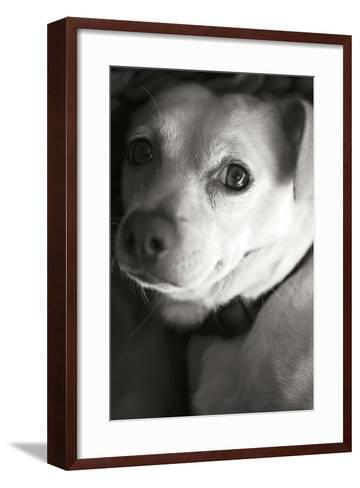 Second Glance Black and White-Karyn Millet-Framed Art Print