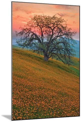 Rancheria-Mark Geistweite-Mounted Photographic Print