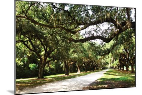 Charleston Oaks 4-Alan Hausenflock-Mounted Photographic Print