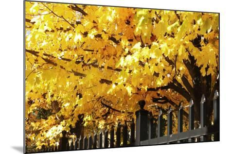 Boughs of Gold 4-Alan Hausenflock-Mounted Photographic Print