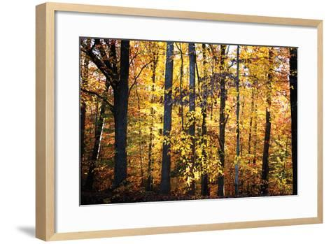 Sunset Through the Woods 2-Alan Hausenflock-Framed Art Print