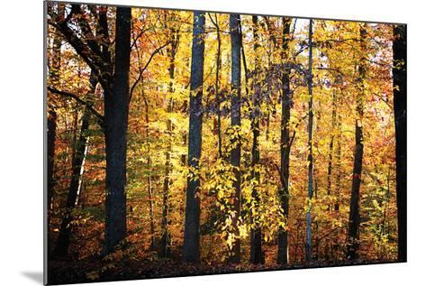 Sunset Through the Woods 2-Alan Hausenflock-Mounted Photographic Print