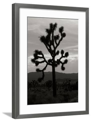 Yucca Brevifolia I-Erin Berzel-Framed Art Print