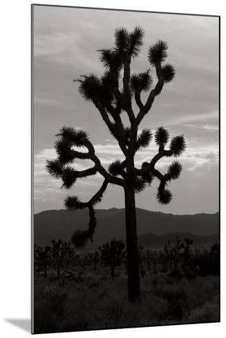 Yucca Brevifolia I-Erin Berzel-Mounted Photographic Print