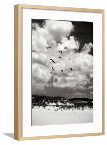 Pelicans over Dunes V BW-Alan Hausenflock-Framed Art Print