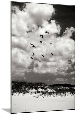Pelicans over Dunes V BW-Alan Hausenflock-Mounted Photographic Print