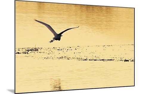 Egrets in the Sunrise 4-Alan Hausenflock-Mounted Photographic Print