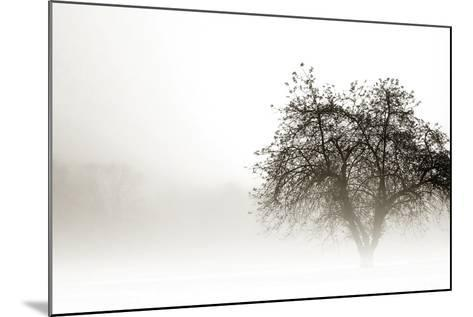 In the Mist I-Alan Hausenflock-Mounted Photographic Print
