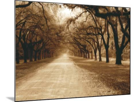 Savannah Oaks II-Alan Hausenflock-Mounted Photographic Print