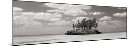 Gaulding Cay Conch BW Panel-Larry Malvin-Mounted Photographic Print