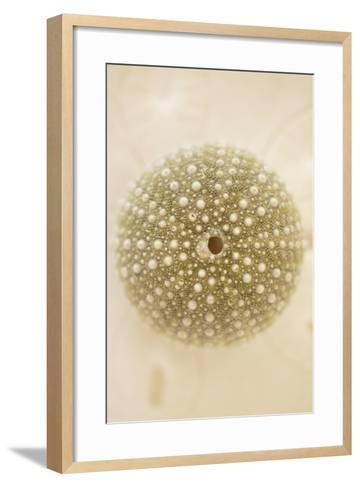 Ocean Treasures IV-Karyn Millet-Framed Art Print