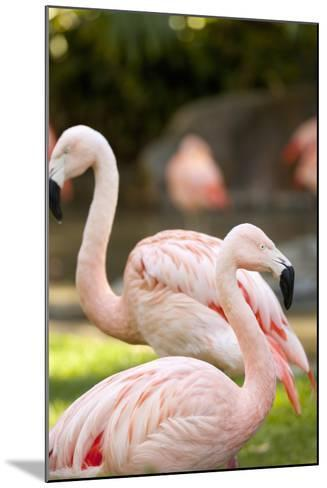Flamingos II-Karyn Millet-Mounted Photographic Print