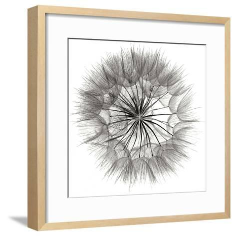 Goat's Beard 4-Jim Christensen-Framed Art Print