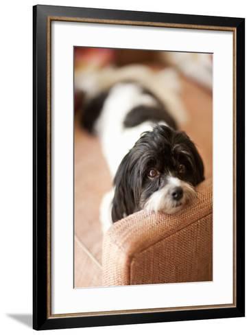 A Dog's Life V-Karyn Millet-Framed Art Print