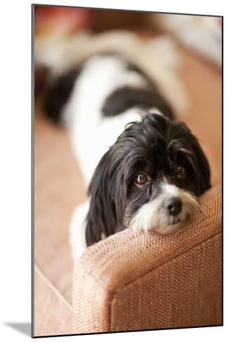 A Dog's Life V-Karyn Millet-Mounted Photographic Print