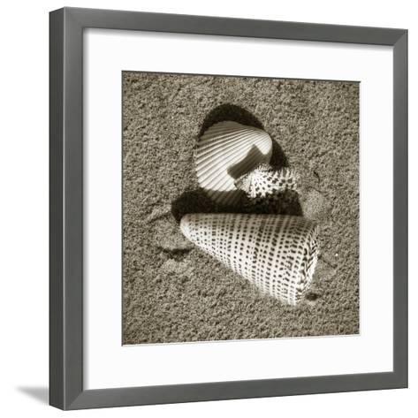 Seashells VII-Alan Hausenflock-Framed Art Print