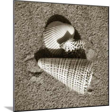 Seashells VII-Alan Hausenflock-Mounted Photographic Print