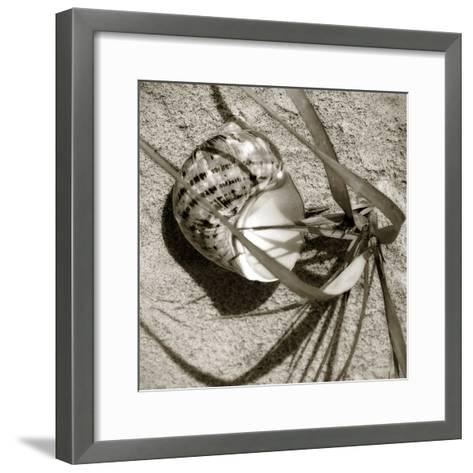Seashells III-Alan Hausenflock-Framed Art Print