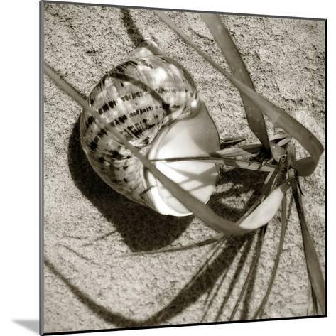Seashells III-Alan Hausenflock-Mounted Photographic Print