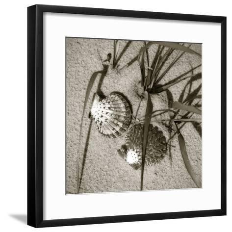 Seashells IV-Alan Hausenflock-Framed Art Print
