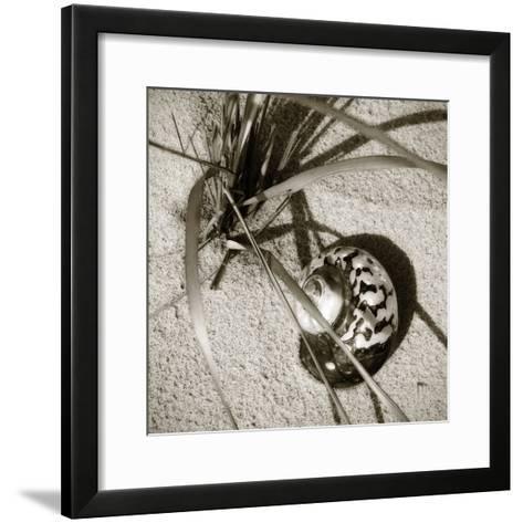 Seashells II-Alan Hausenflock-Framed Art Print