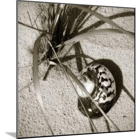 Seashells II-Alan Hausenflock-Mounted Photographic Print