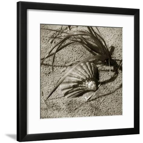 Seashells I-Alan Hausenflock-Framed Art Print