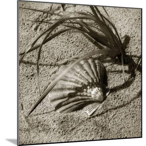 Seashells I-Alan Hausenflock-Mounted Photographic Print