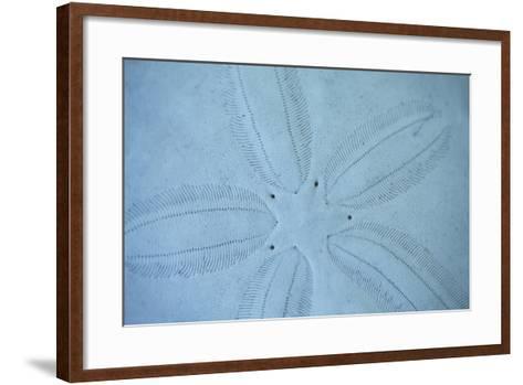 Sand Dollar I-Karyn Millet-Framed Art Print