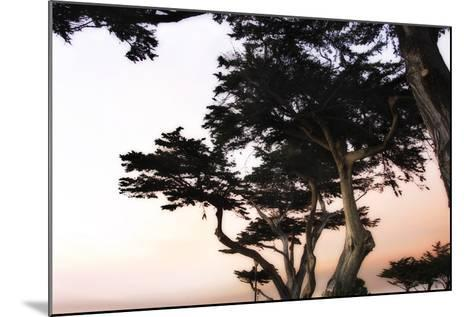 Cypress Silhouette 3-Alan Hausenflock-Mounted Photographic Print