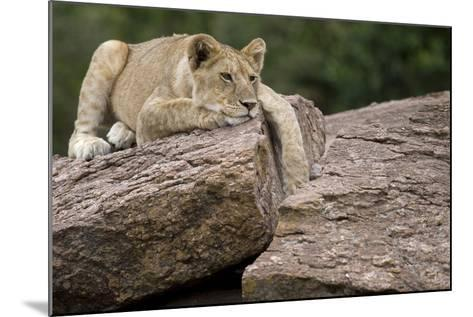 Lounging-Susann Parker-Mounted Photographic Print