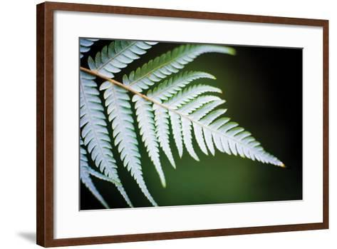 Silver Tree Fern II-Bob Stefko-Framed Art Print