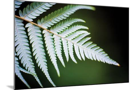 Silver Tree Fern II-Bob Stefko-Mounted Photographic Print